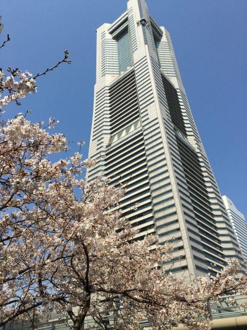 Cherry blossom day