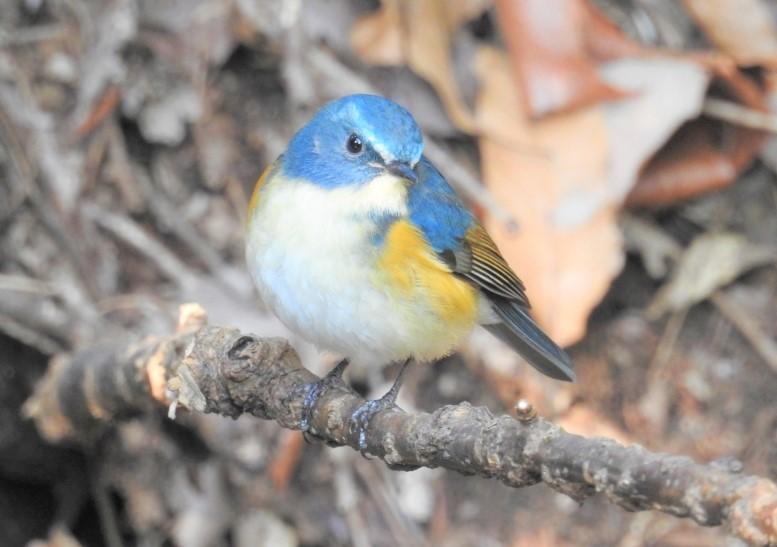 附近可以看到一些可愛的野鳥